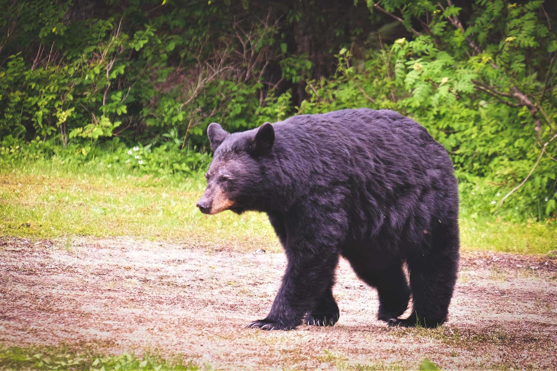 DNR proactively warning Stony Run-area residents to take precautions against bears in wake of 2019 mauling