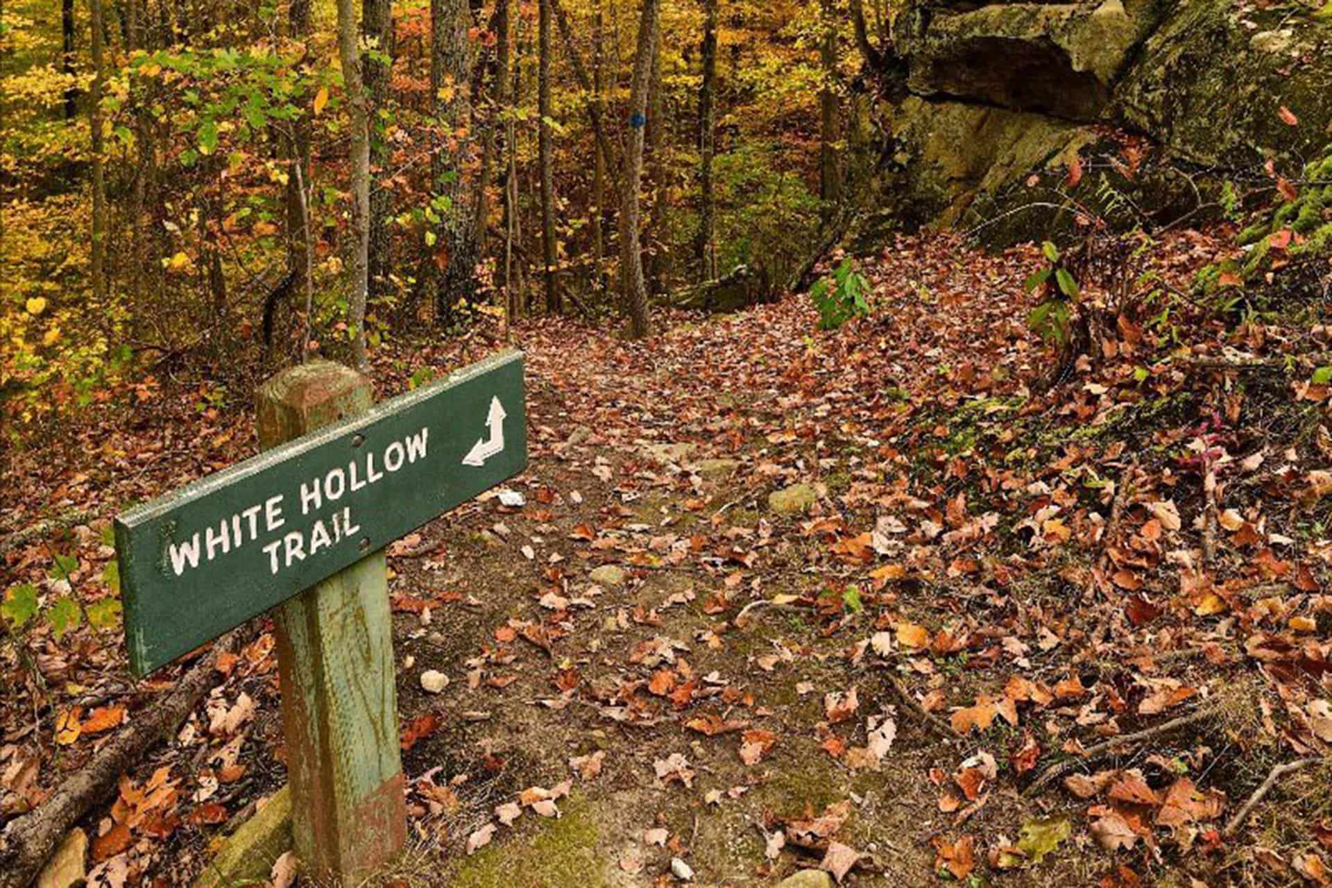 WonderFALL Walks planned in October at six West Virginia state parks and forests