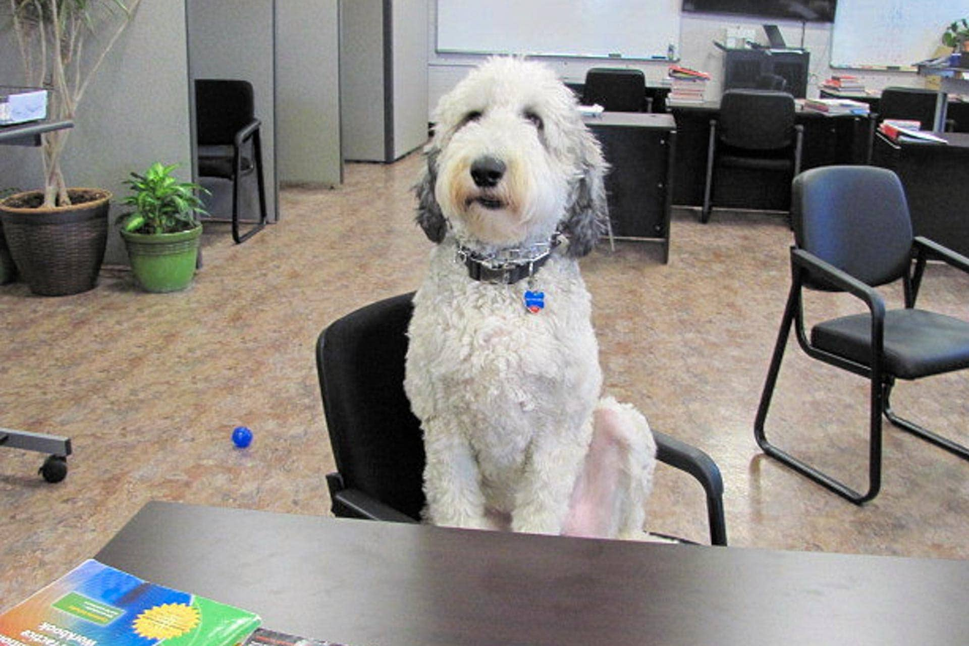 Ollie goes to school: Certified therapy dog offers love, acceptance to students in PALS program