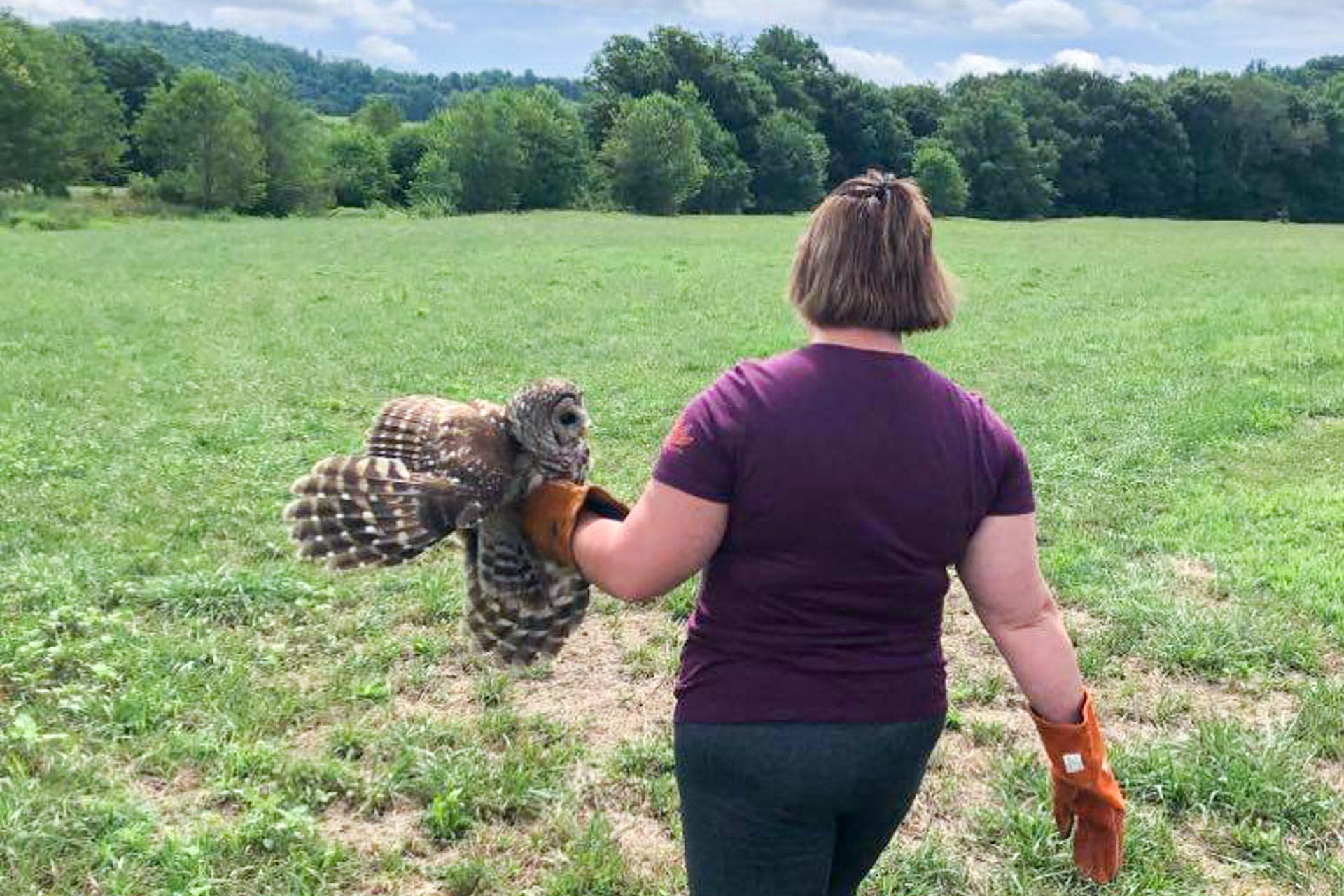 Owl injured on Brushy Fork Road returns to Upshur for release after rehabilitation