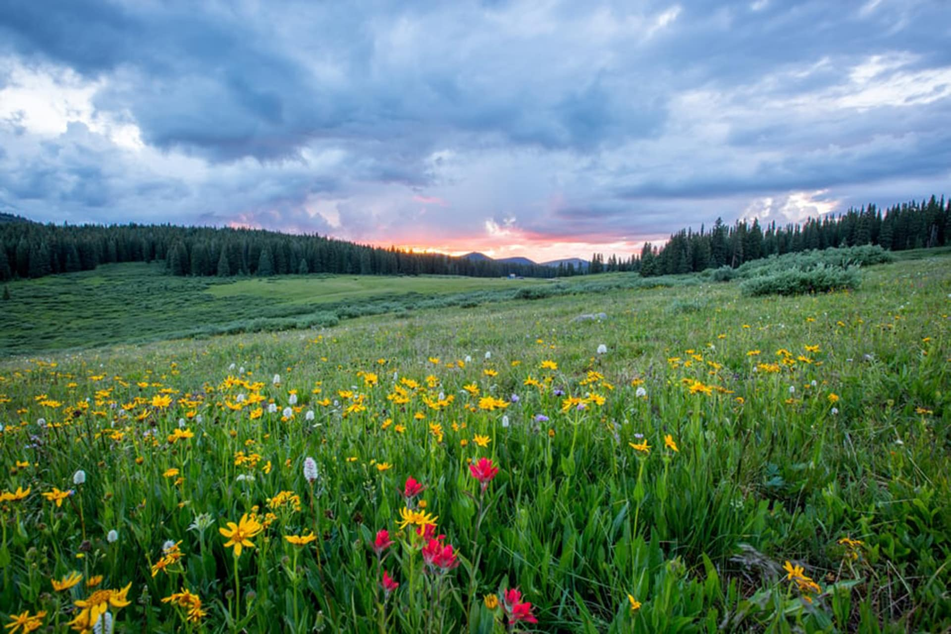 WVDEP now accepting submissions for 2021 'Roadsides in Bloom' calendar contest