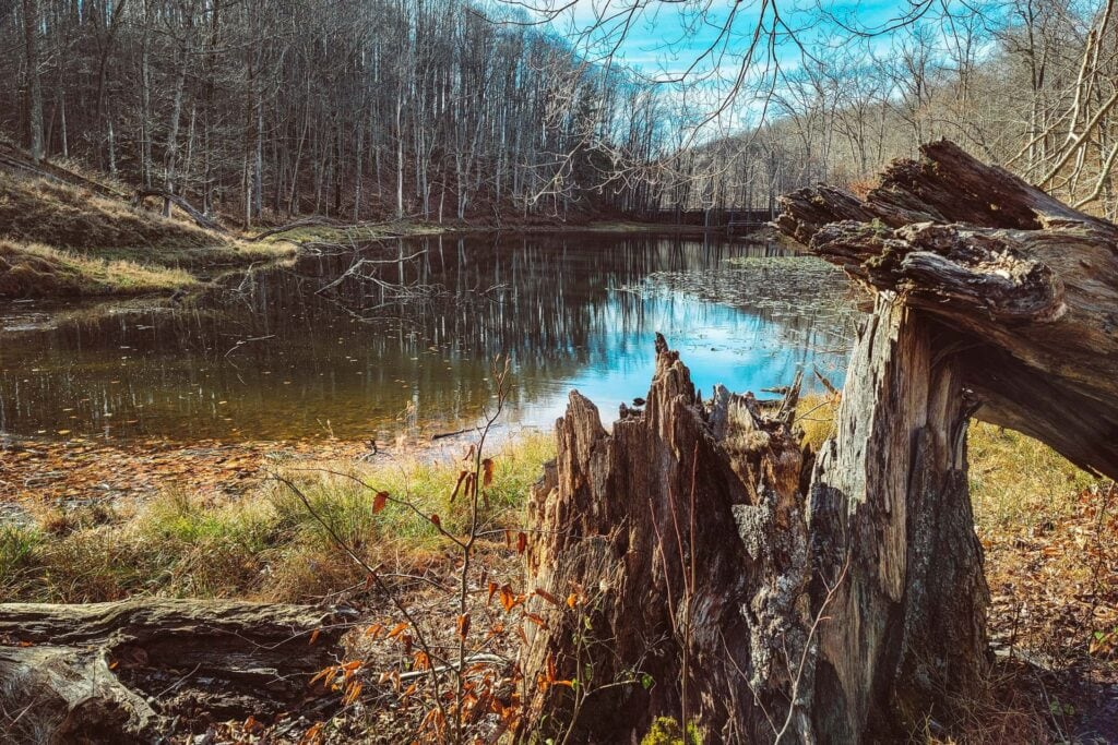 A fishing pond along the Old Oak Trail at the West Virginia Wildlife Center.