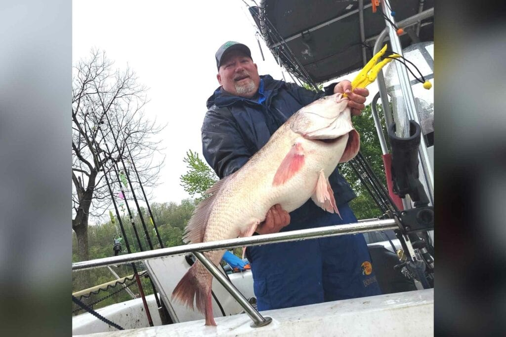 John Gibson holds his record freshwater drum catch.
