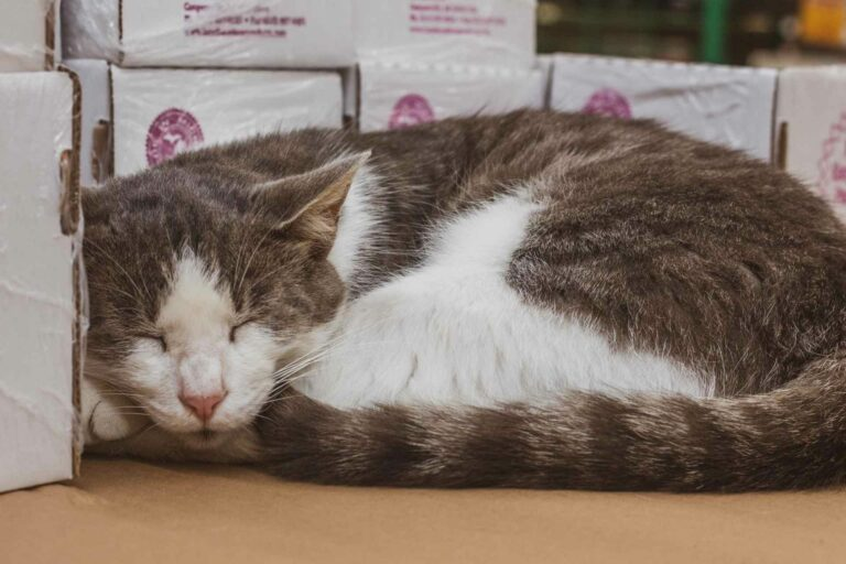 Boots kept a watchful eye on things during the recent pet adoption event at Southern States in Buckhannon.
